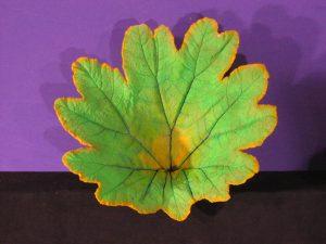 Gunnera Leaf; Concrete - SOLD